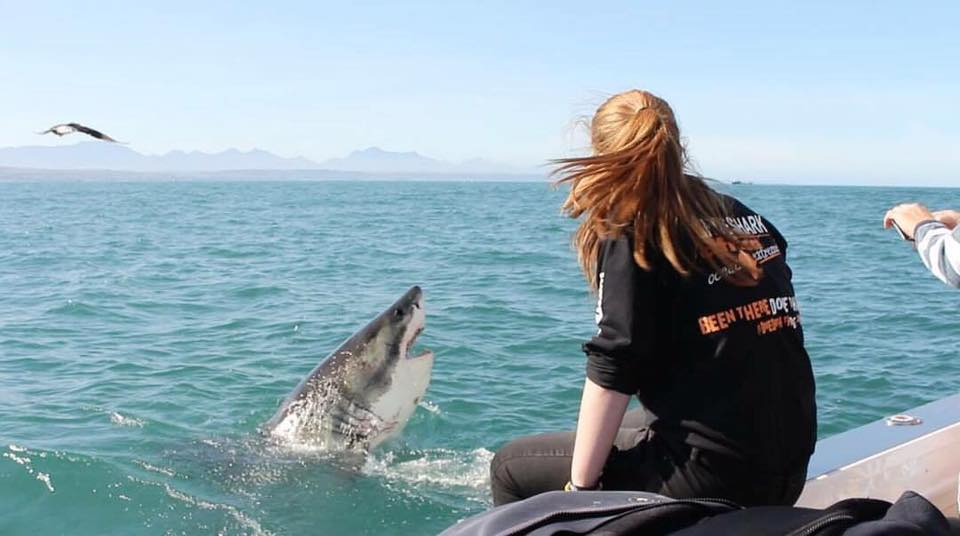 White Shark Africa in Mossel Bay on the Garden Route in South Africa